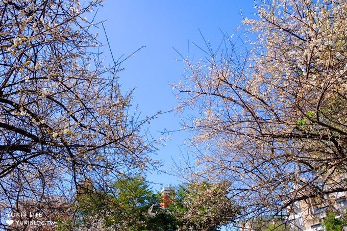 台北賞梅打卡點【志成公園】熱門梅花攝影地點×溜滑梯免費親子景點 - yukiblog.tw