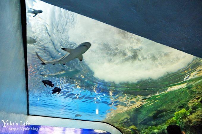 墾丁景點/親子景點【屏東海生館】超大鯨魚戲水池×玩水、賞魚生態之旅豐富好玩一整天 - yukiblog.tw
